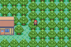 Pokemon Ruby Destiny Reign of Legends - HELP HELP IM STUCK INDUH TREE! - User Screenshot